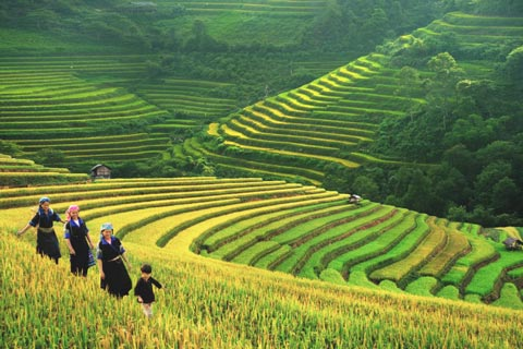 Sapa Tour: Visit Cat Cat village, trekking Ta Phin and transfer by Bus